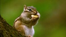 야생여정 5편 1 다람쥐
